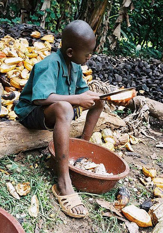 niño cacao